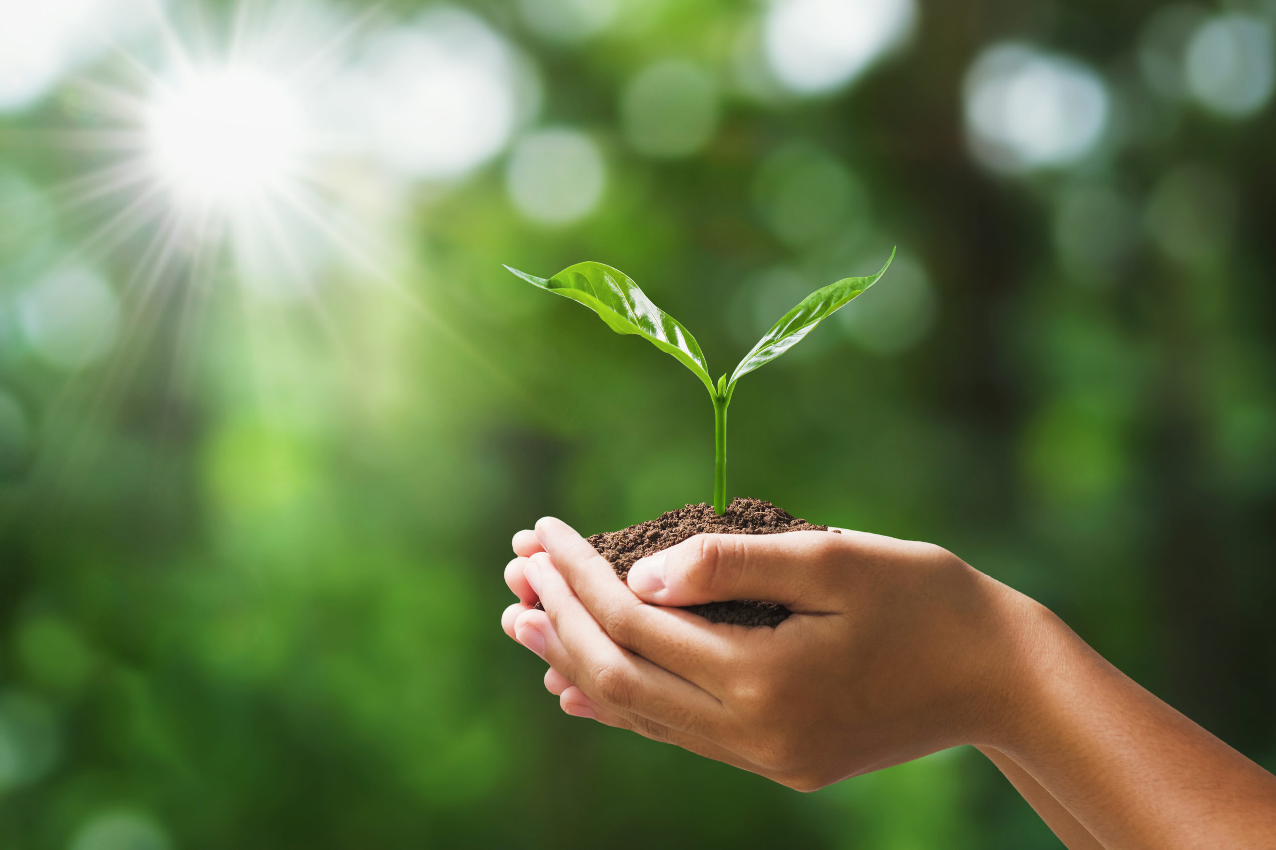 hand holding young plant on blur green nature background. concep